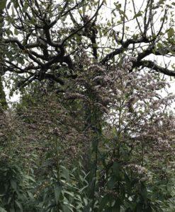 Efteråret i min have af love2live
