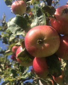 Sansernes Magt - Stress - Love2Live - opskrift - æblegele - Fynske Influencers - Dansk blog