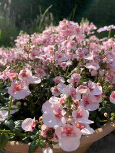 Tvillingeblomst - Bloggerblomster - blomster - tørrede blomster - evighedsbuket - livsstil - interiør - Fynske Influencers - kristina sindberg - bloggerliv - love2live