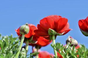 blomster - tørrede blomster - evighedsbuket - livsstil - interiør - Fynske Influencers - kristina sindberg - bloggerliv - love2live - valmue